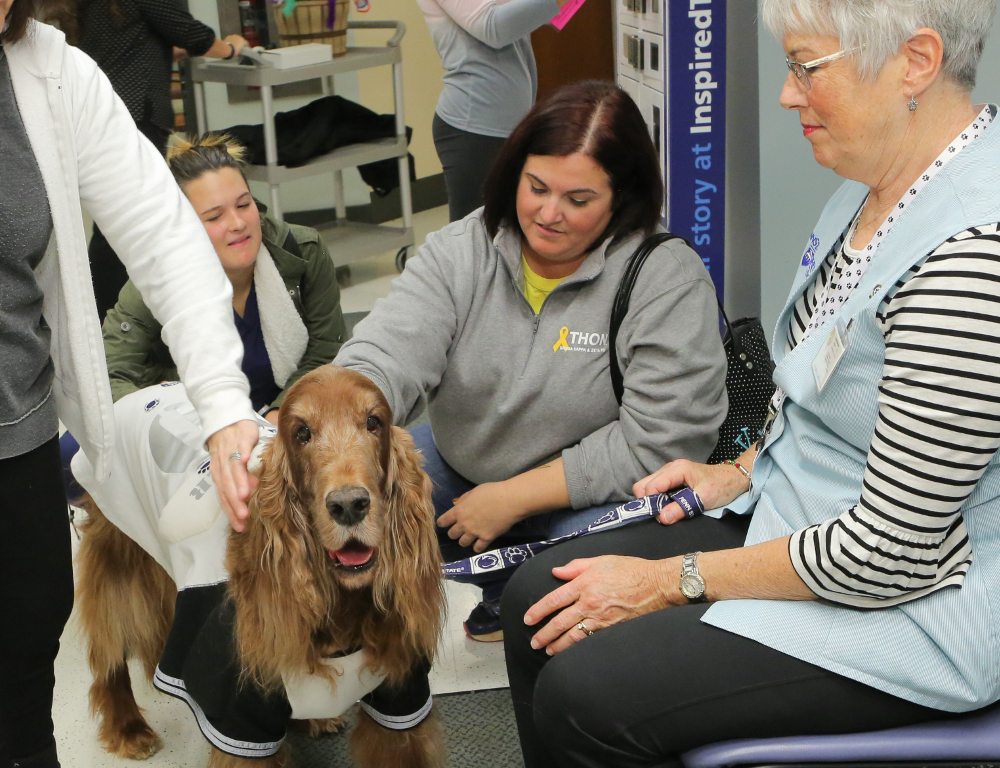 A medium-sized dog with brown hair looks at the camera as three people pet it, and a fourth woman looks on.