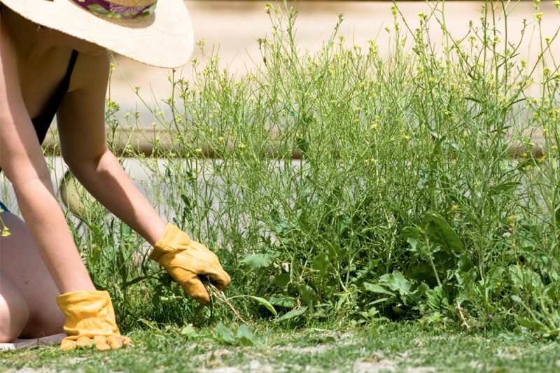 A woman in a wide-brimmed hat is on her knees, wearing yellow gardening gloves and pulling weeds from alongside a building.