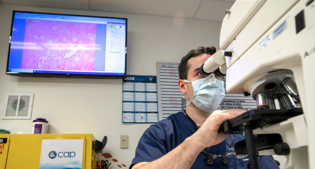 Dr. Todd Cartee looks over skin samples using a digital imaging system.