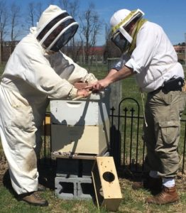 Dr. Andrew Freiberg and Scott Stanley, dressed in head-to-toe bee suits that include head coverings, work with a hive that is sitting atop cinder blocks.